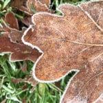 Winter in Dwingeloo